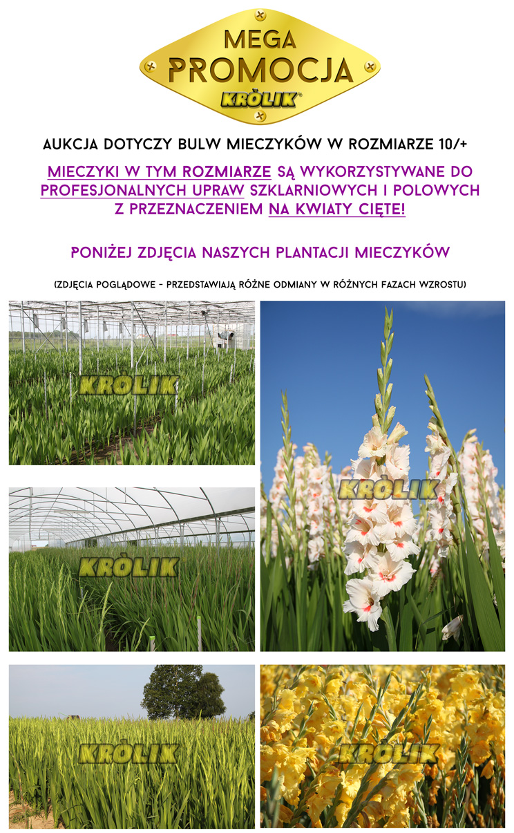 http://cebulki-kwiatowe.home.pl/allegro/zdjecia_produkt/mieczyki.jpg